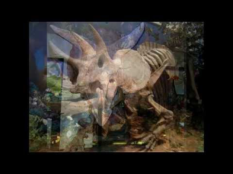 royal tyrrell museum-royal tyrrell museum of palaeontology museum