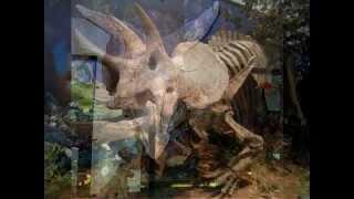 royal tyrrell museum-royal tyrrell museum of palaeontology museum