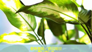 原田知世さんの「愛情物語」歌いました。 なかなか上手く歌えなかったん...