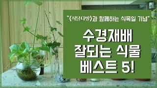 식물초보를 위한 수경재배 식물 추천 베스트5, 번식 비…