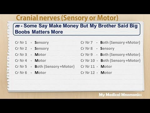 Cranial Nerves  My Medical Mnemonics - YouTube