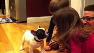 The kids meet Ruby, the French bull dog