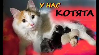НАША КОШКА РОЖАЕТ КОТЯТ! Кошачий FUNNY 4 Первый день жизни наших котят