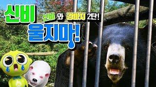 베어가 곰이라구?! 동물원에 보내야한다구?! 신비와 베어의 작별이야기!