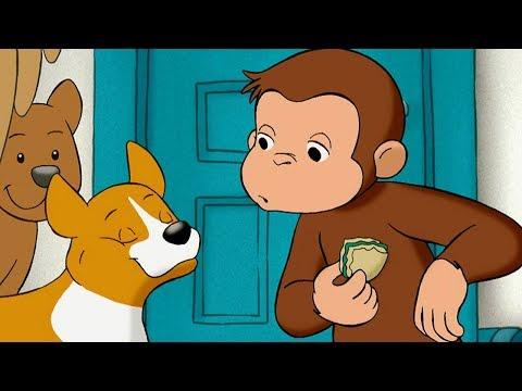 Jorge el Curioso en Español | Jorge Cuenta los Perros | Dibujos animados para niños