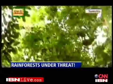 Deforestation in Indonesia a threat to Asian apes Presented by Bahar Dutt
