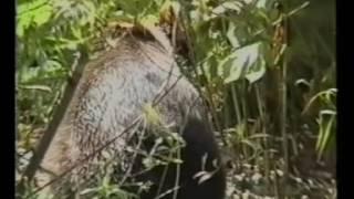 Русский медведь нападение на человека!!!