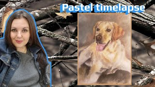 Timelapse pastel portrait of Griffon the labrador - Drawings by Mica