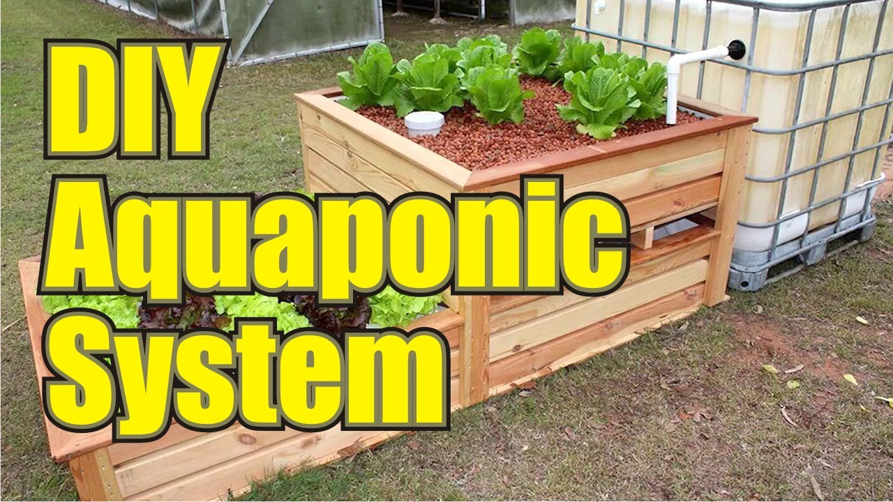 backyard aquaponics diy aquaponics system to farm fish with