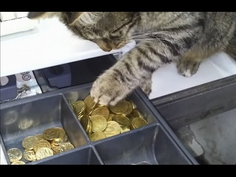 Mr.Credo - ЧУДНАЯ ДОЛИНА. ВОР ЗАМОЧЕК ОТКРЫВАЕТ ПРИКОЛ: FUNNY CATS