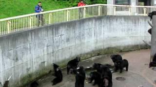 秋田県北秋田市阿仁の熊牧場です。