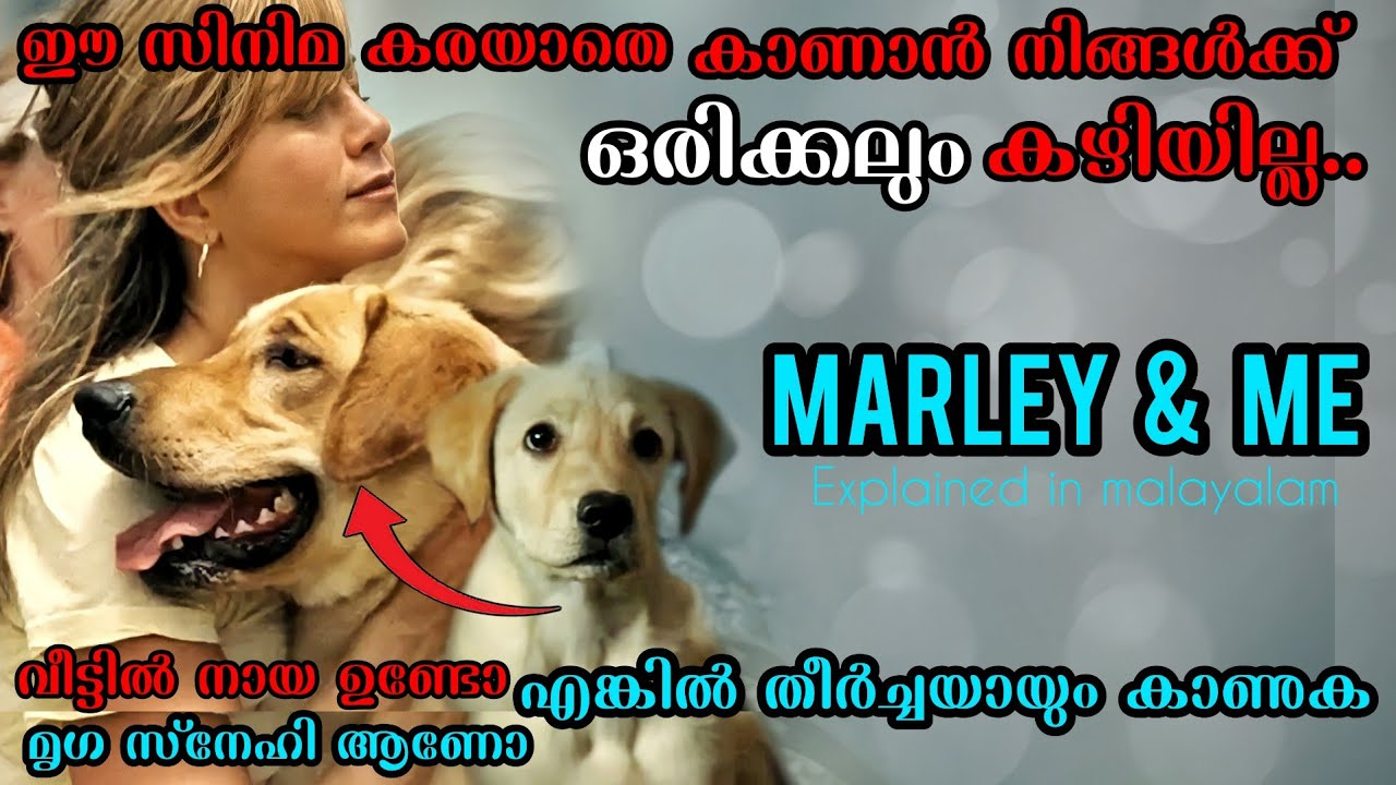 Download Marley & Me (2008) Movie Explained in Malayalam   Hollywood Movie explained in malayalam