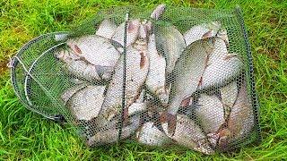 Август! Рыбалка на КОЛЬЦО! Работает ЛИЧИНКА! Хорошо ОТДОХНУЛИ - Второй день! р.Чулым!