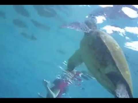 Liquid Image - Nager avec les tortues de mer à Maui