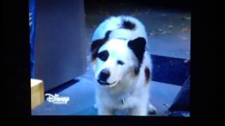 Собака точка ком: Любовь Карла и Евери это сон(часть 2)
