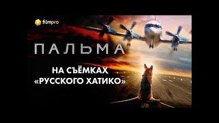 На съёмках «русского Хатико» - фильма «Пальма»