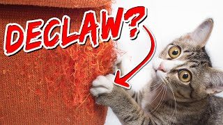 Should I Declaw My Cat? | Advice From A Vet