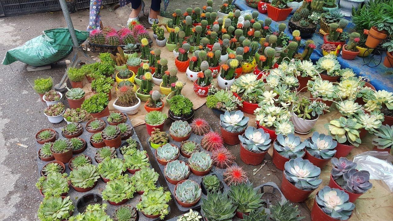 Khám phá phiên chợ bán hoa cây cảnh đẹp nhất Việt Nam