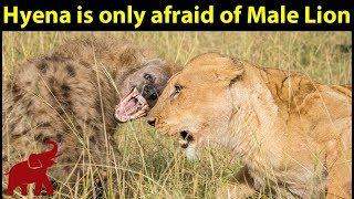 動物の戦い:私のチャンネルでは、野生動物、動物の興味深い場面、動物...