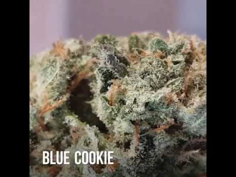 Therapeutic Health Center Girl Scout Cookie