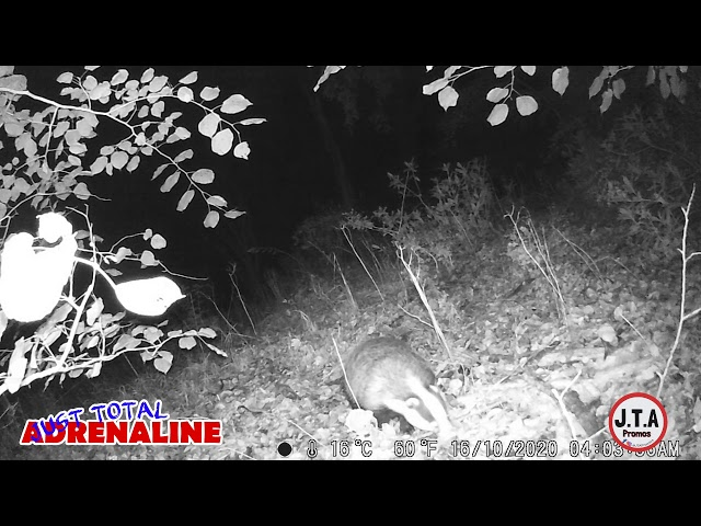 Badger near Hawick - Night Vision Infrared HD Wildlife Camera clip - by JTAPromos www.JTAPromos.net