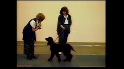 Clicker training calmness in dogs - Karen Pryor