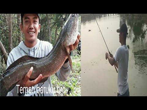 Spot mancing gratis tersembunyi di Jakarta. Fishing snekhead