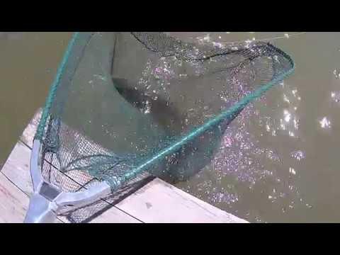 Супер !!!рыбалка 48 часов База рыболов 12 бент трудовая рыбалка близ Алматы на пророщенное зерно