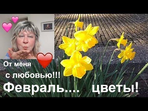 417. Моя Англия.  Для  тех,  у  кого  снег в  феврале. Цветы  сквозь  русские  сугробы.. .