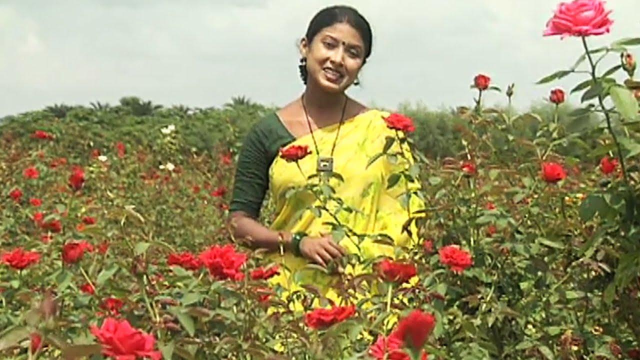 ফুলের রাজ্য যশোরের 'ঝিকরগাছা' | Amazing Flowers' Cultivation in Bangladesh