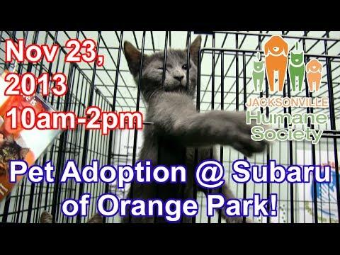 Nov 23rd 2013: Share the Love Adoption Event @ Subaru of Orange Park
