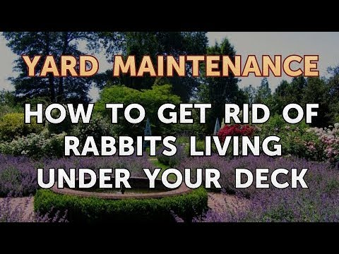 How To Get Rid Of Rabbits Living Under Your Deck