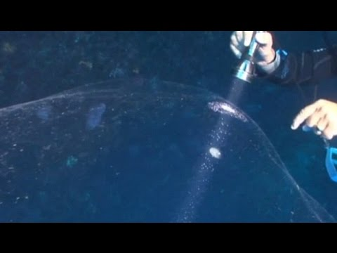 MYSTERIOUS GIANT TRANSPARENT SPHERE AT THE BOTTOM OF THE SEA IN TURKEY?  AUGUST 11, 2015 (EXPLAINED)