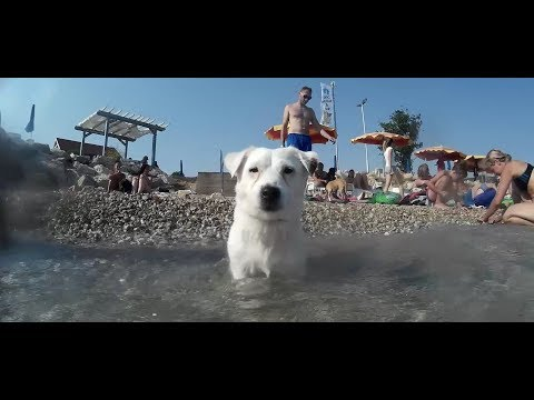 Swimming with puppies - Monty's dog beach and bar, Croatia