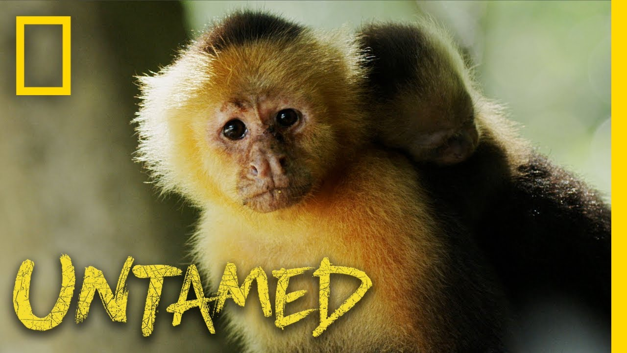 Monkeys Fishing for Clams | Untamed
