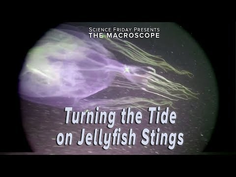 Turning The Tide On Jellyfish Stings