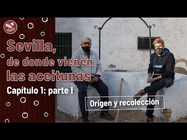 Sevilla, de donde vienen las aceitunas   Capítulo 1 (parte I): Origen y recolección