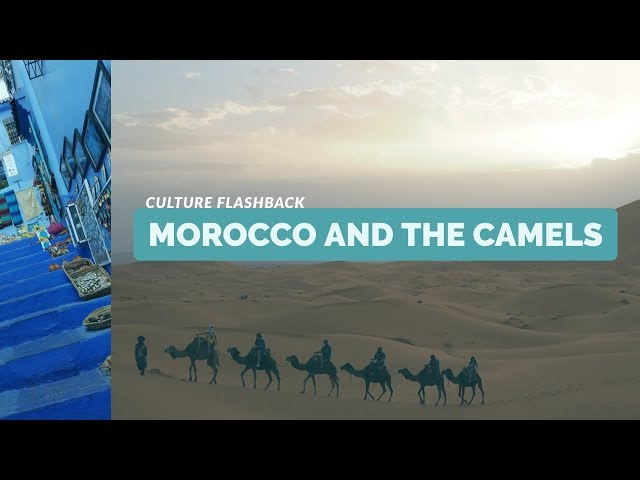 Morocco and the Camels - Culture Flashback