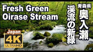 [4k]JAPAN 奥入瀬渓流の新緑 Fresh Green.The Oirase Stream in nature is beautiful  Discover Nippon