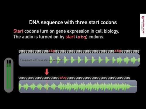 What does DNA sound like? 02 START Sequences