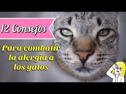 12 Consejos Para Ayudar a Combatir la Alergia a los Gatos en Casa