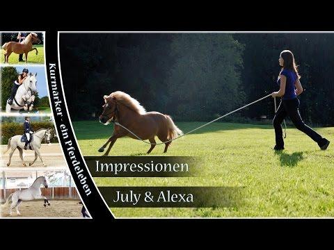 Bild: Kurmärker - Pferdeleben rund um Pferde