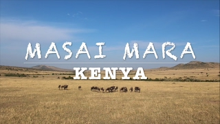 Masai Mara National Reserve - Kenya