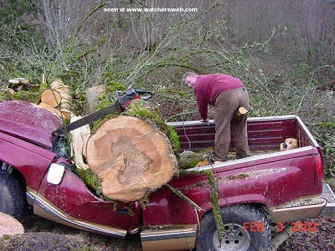 Tree Cutting Fails And Idiots With Chainsaws 2 - YouTube