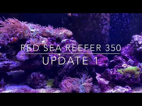 red-sea-reefer-350:-display-tour-update-1