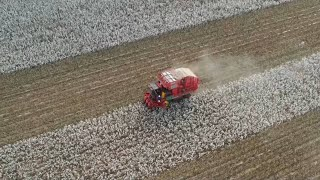 A glimpse of cotton harvest in Xinjiang's Bayingolin