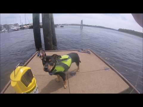Sheepshead, Marine patrol, and Filleting