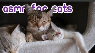 Calming Music For Cats  3 Hours of Feline ASMR!