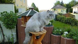 видео Подставка для украшений Кошечка Kitty