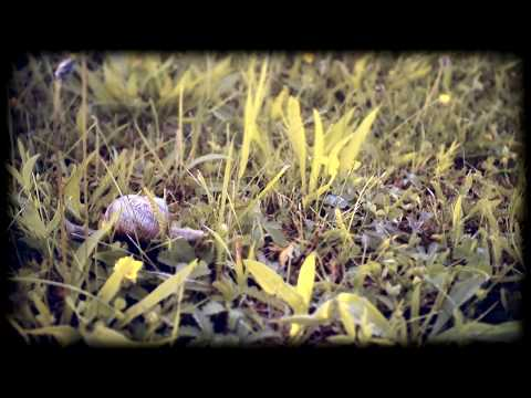 Gourd dulcimer, with snails